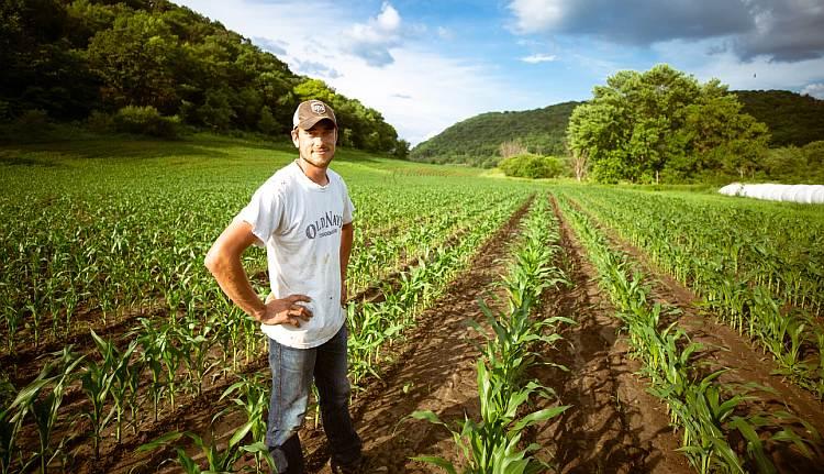 Doradztwo rolnicze, co to w ogóle jest i czy warto z niego skorzystać