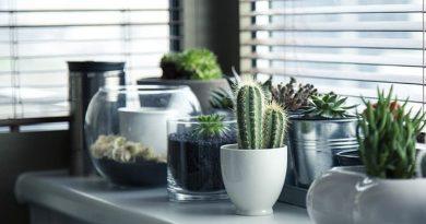 Jak pielęgnować kaktusy w doniczkach?