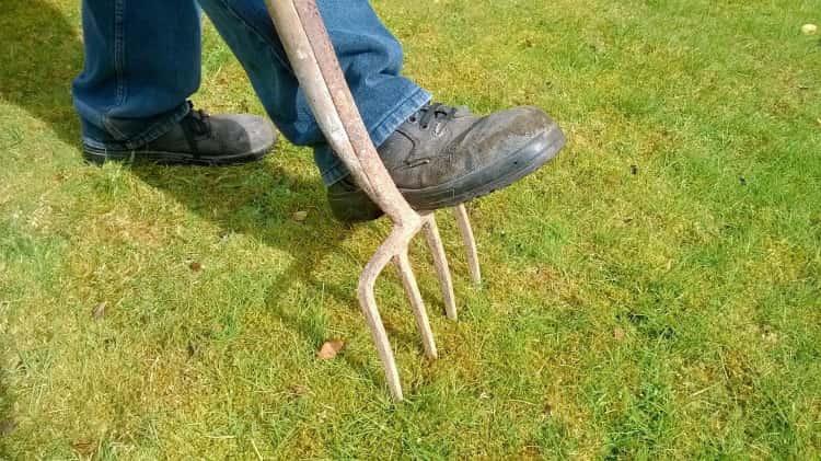 Jak pielęgnować trawnik po okresie zimowym?