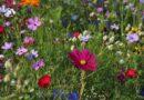 Piękno tkwi w prostocie, czyli uprawa łąki kwietnej w ogrodzie
