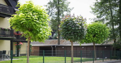 Katalpa - egzotyczne drzewo do Twojego ogrodu